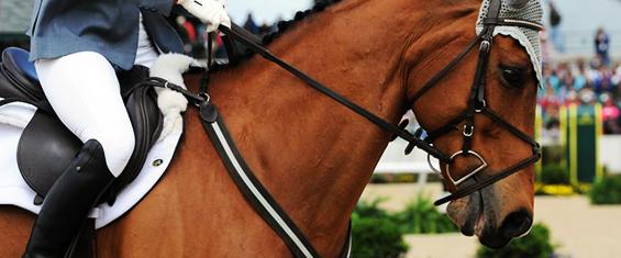 materiel dressage equitation